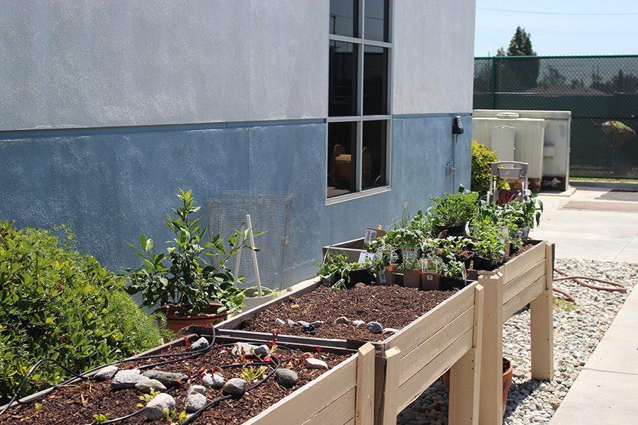 Environmental+Club+Garden