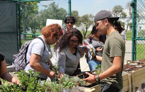 Eddie Santana, psychology major, is showing students how to sprout plants into the ground. Santana knows how to space them correctly and insert water pipes to the plants. Photo by: Tisha Lenon/TM